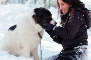 Dog Care Tips in Winter