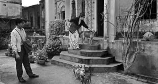 Dogs documentary photography by Kaushik sSengupta