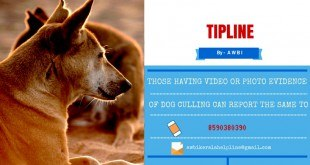 Tipline to prevent culling of dogs