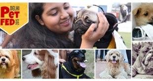 Dog Breeds India