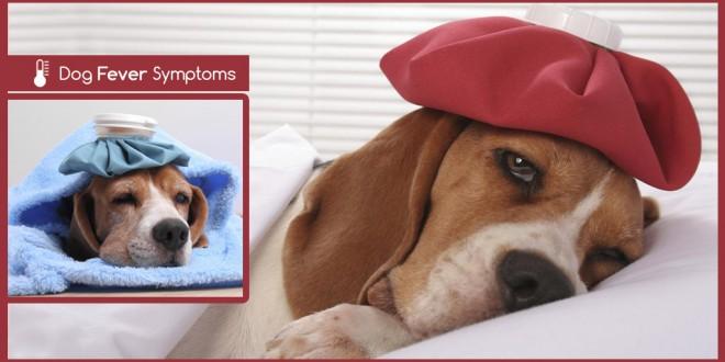 dog fever symptoms