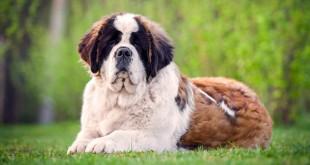 Ban on import of pedigree dog breeds