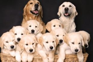 Happy Dog Parents1