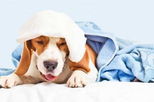 Why dogs vomit