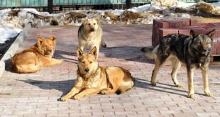 stray dog issue