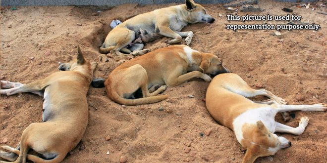 dogs poisoned