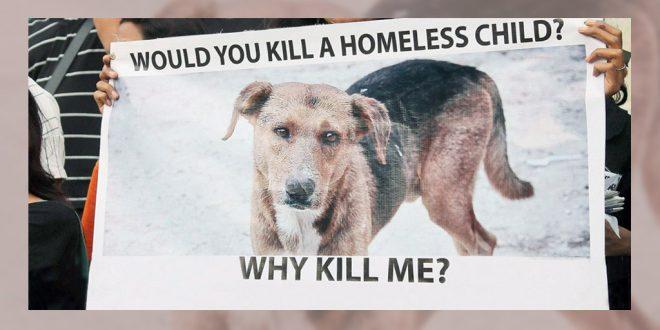 penalty-for-killing-strays 1