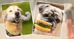 Funny_dogs