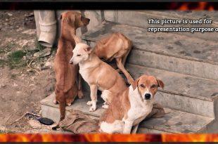 stray dogs burned alive