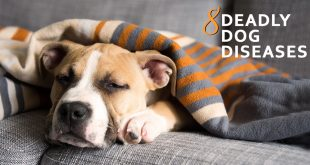 Deadly Dog Diseases
