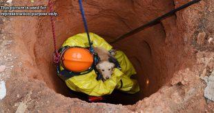 Firemen Rescue A Dog