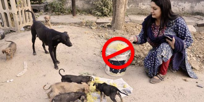 Not To Feed Stray Dogs