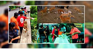 Girl Feeds 1,200 Stray Dogs