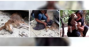 Animal Aid Unlimited Rescued A Dog