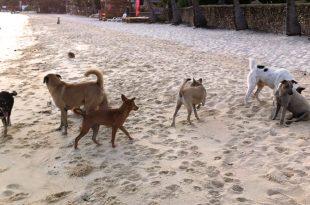 Stray Dogs At Marina
