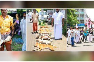 Stray dogs killed