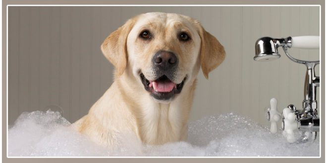 Can You Use Baby Shampoo For Dogs Dogexpress