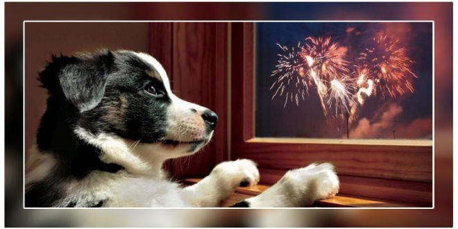 Pets Safe And Happy This Diwali