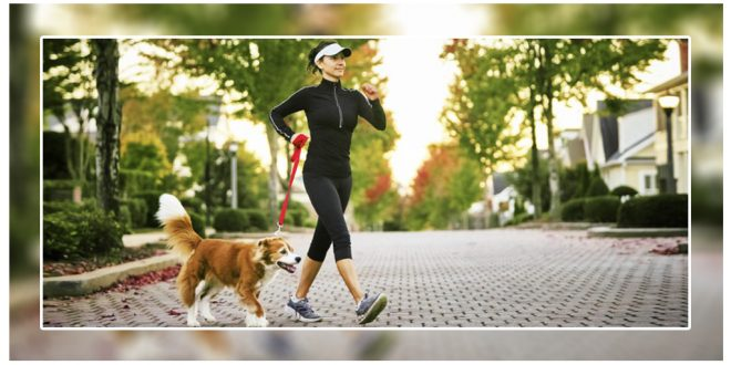 3 Work Outs You Can Do With Your Dog
