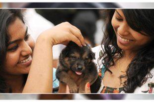 Adopting stray dogs