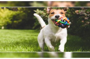 Dog live longer