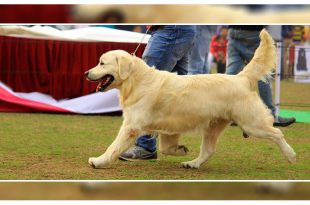 Patiala Dog show