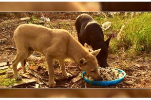 Biryani Party for Stray Dogs