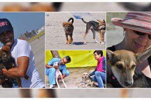 Dog Rescue_1