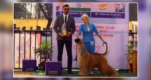 Dog show in chandigarh
