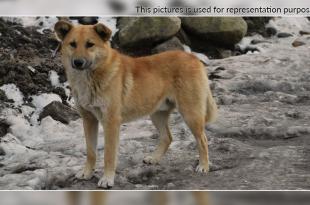 Pet dog Saved Life_1