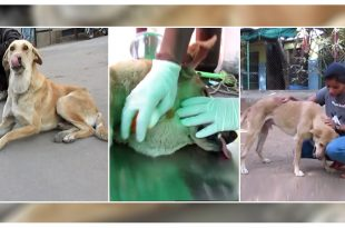 Stray Dog's Life Saved