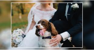 Dog On Your Wedding Day