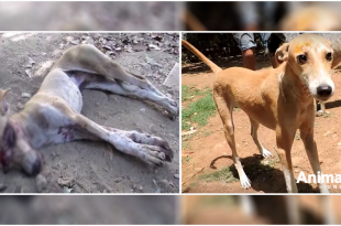 animal aid unlimed saved stray dog