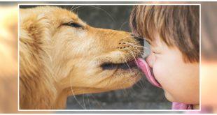 Dog lick