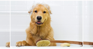 Clean your Dog