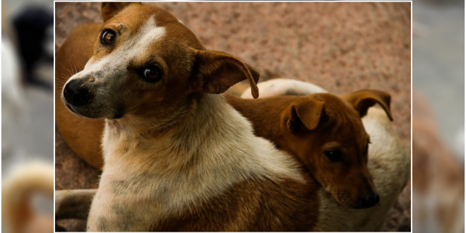 Adopt Stray Dogs