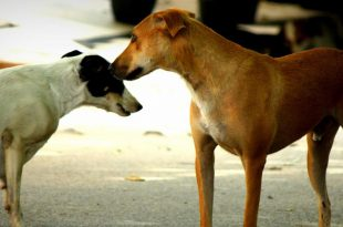 MC Schedule Multiple Vaccination Camps For Stray Dogs