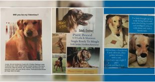 Matrimonial Ads for Dogs