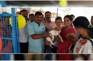 Stray Dog Adoption in Hyderabad