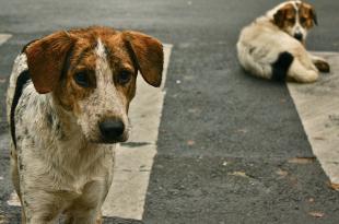 Woman beaten for feeding stray dog