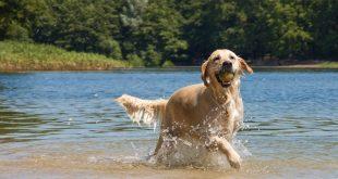 Fun Activities With Dog