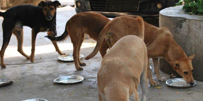 Stray Dog Feeding in India
