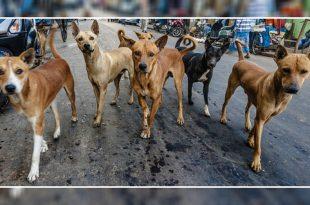 Panchkula Residents Demand Better Solution To Control Stray Dog Menace