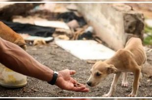 Stray Dogs Adoption in India