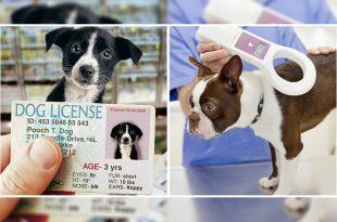 pet dog license_1