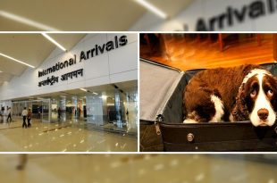 Dogs Being Smuggled Out Of Russia