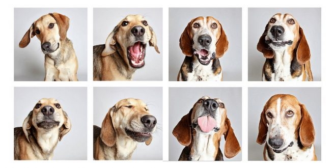 Dogs With Funny Facial Expressions