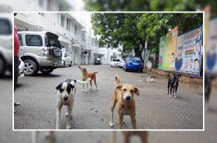 President Ram Nath Kovind Is A Dog Lover