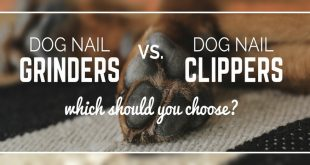 Dog Nail Clippers vs. Grinder