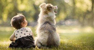 How To Celebrate Friendship Day With Your Pet Dog_1